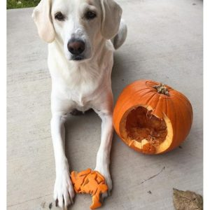 Doge, Doggo, Puppers... No Matter The Name This Pet Just Carved a Pumpkin